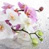 цветок-8