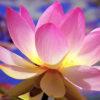 цветок_15